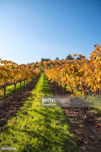 Vineyard and sky