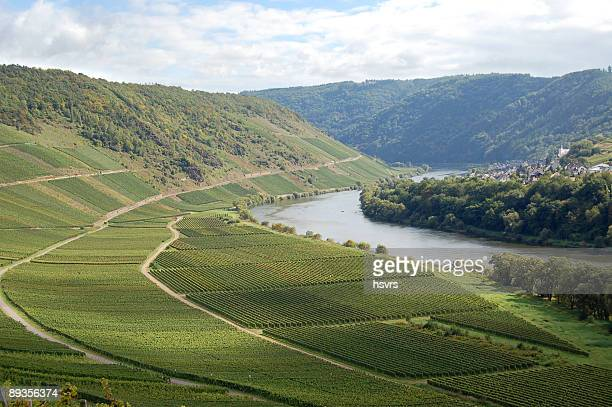 Vineyard im deutschen Fluss Mosel