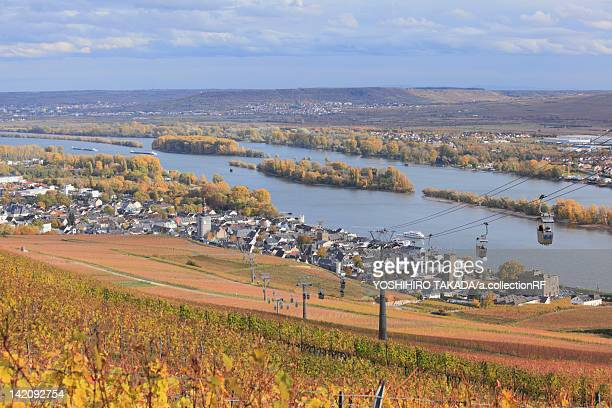 Vineyard by Rhine River
