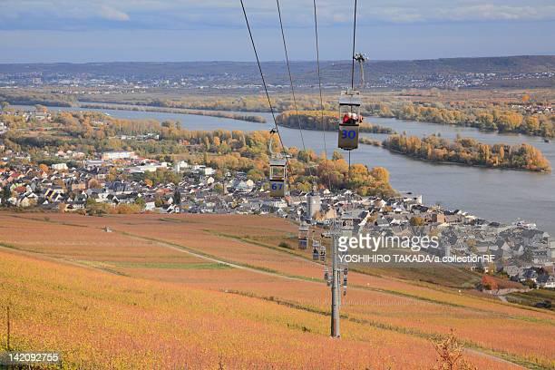 Vineyard by Rhine River