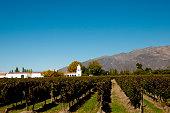 Vineyard - Cafayate - Argentina
