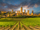 Vineyard covered hills of Tuscany,Italy, with San Gimignano in the background
