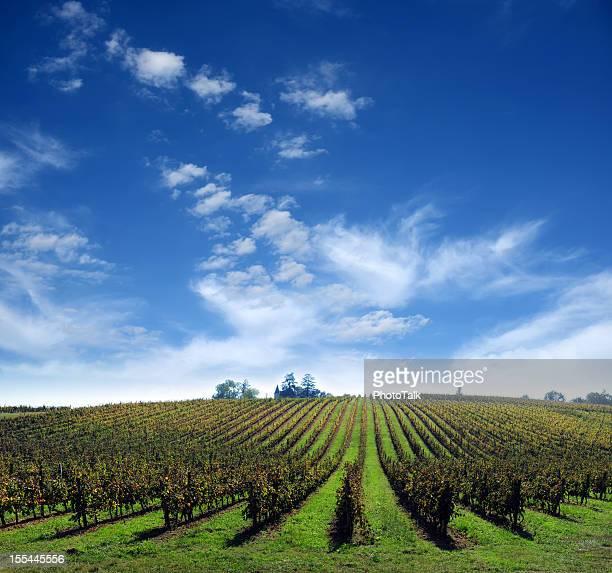 Vignoble de la ferme avec des nuages en arrière-plan-XXXXXLarge