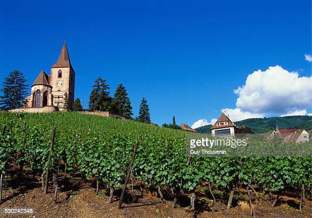 Vineyard, Hunawihr, Upper Alsace, France