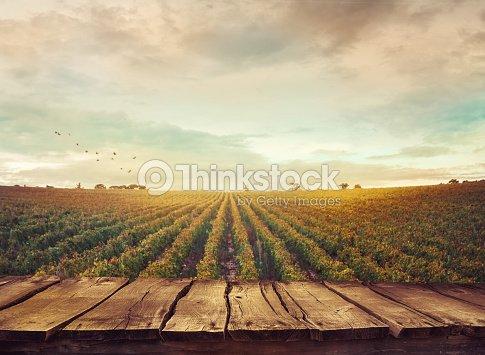 Vignoble en automne  : Photo