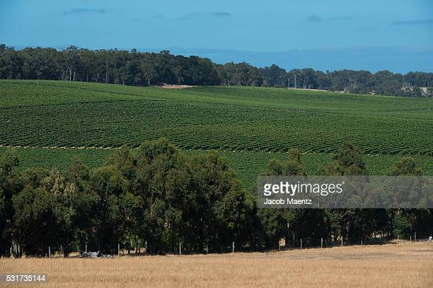 A vineyard in Margaret River, Western Australia.