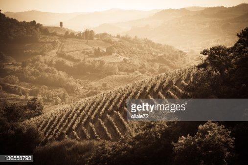 ブドウ園で Monferrato -ピドモント,イタリア