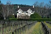 Vineyard in Napa Valley an American viticultural area located in Napa County California United States circa 1970s