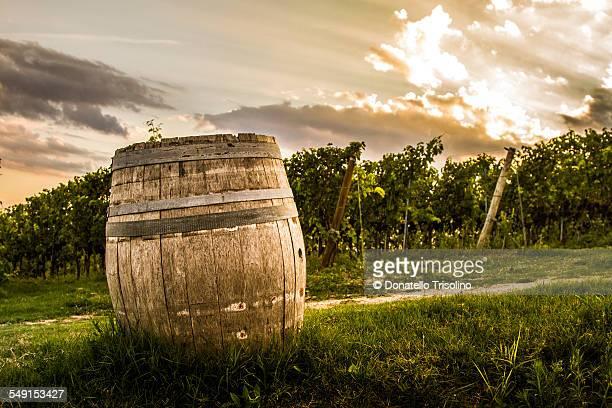 Vineyard in Pesaro