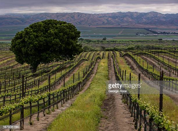 A vineyard in the Salinas Valley wine region known as the Santa Lucia Highlands is viewed on April 4 near Gonzales California The Salinas Valley...