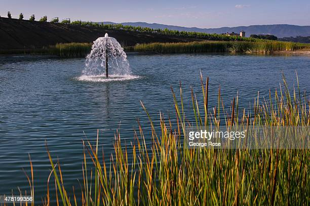 A vineyard irrigation pond aeration sprinkler in Ballard Canyon is viewed on June 10 near Solvang California Because of its close proximity to...