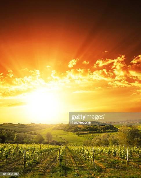 vineyard landscape at sunset