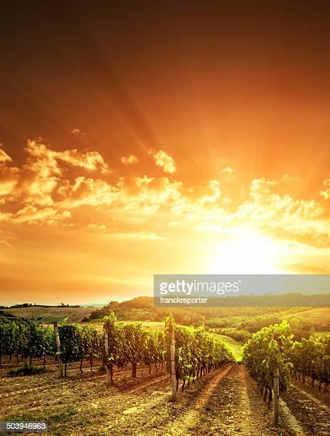Vigneto paesaggio al tramonto