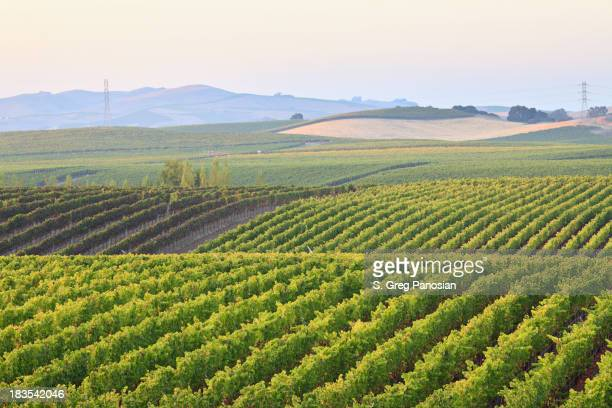 Vineyard landscape on a cloudy day