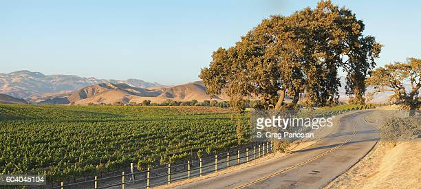 Vineyard Landscape - Summer