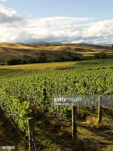 Vineyard, Marlborough