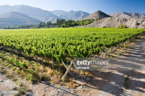 Vineyard near Vicuna, Chile