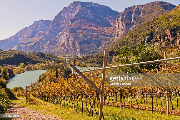 Vineyard mit Blick auf den Lake Santa Massenza, Italien