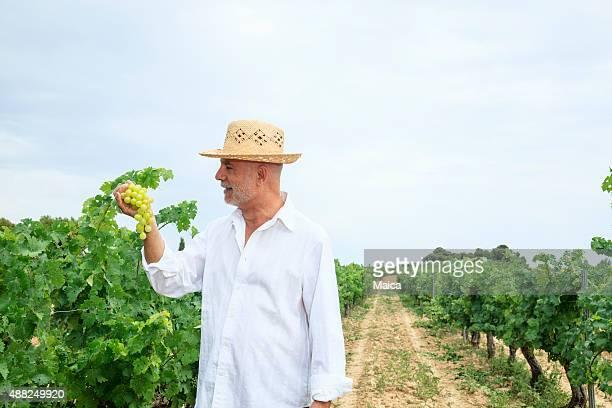 La recherche de son propriétaire du vignoble de raisin