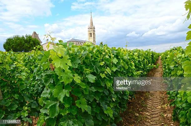 Azienda vinivola