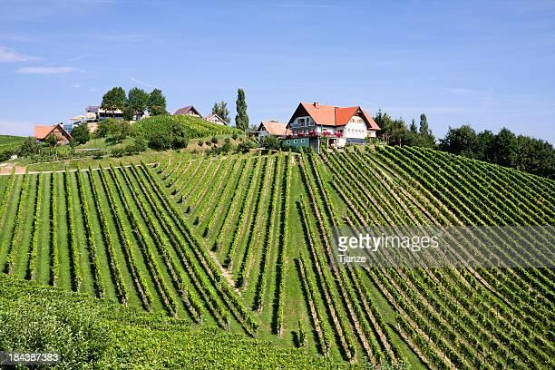 Vineyard south Österreich