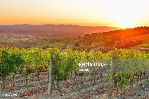 Vineyard sunset from Tuscany