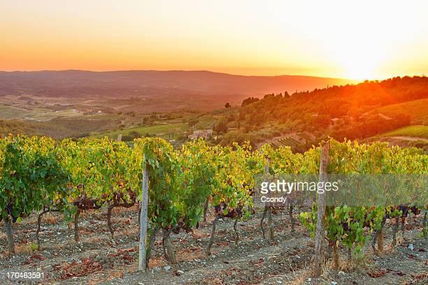 Weinberg-Sonnenuntergang in der Toskana