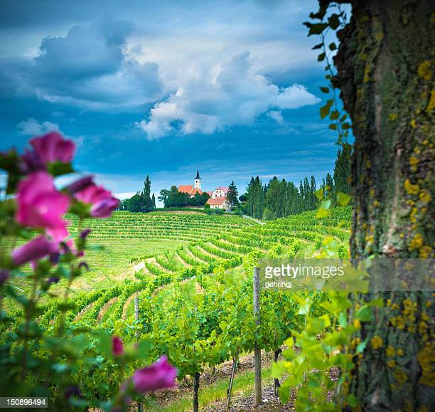 Vineyard under stormy sky