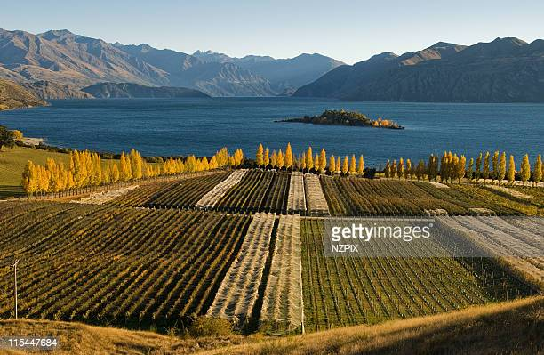Vineyard, Wanaka