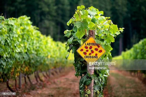 vineyard winery okanagan valley british columbia agriculture viticulture