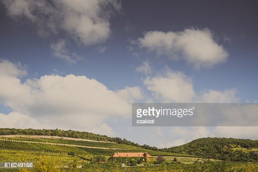 Vineyard with building : Stock Photo