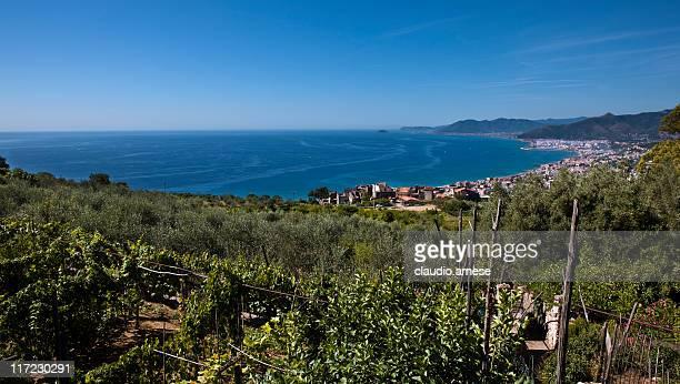 Vineyard con mar Mediterráneo en el fondo. Imagen de Color