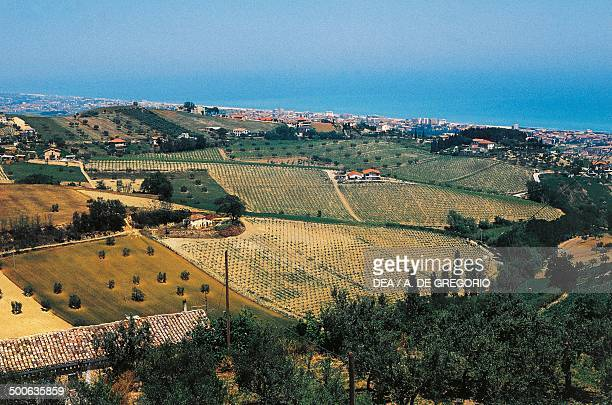 Vineyards and agricultural landscape near Tortoreto Abruzzo Italy