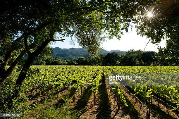Vineyards and Hills, Napa Valley, California