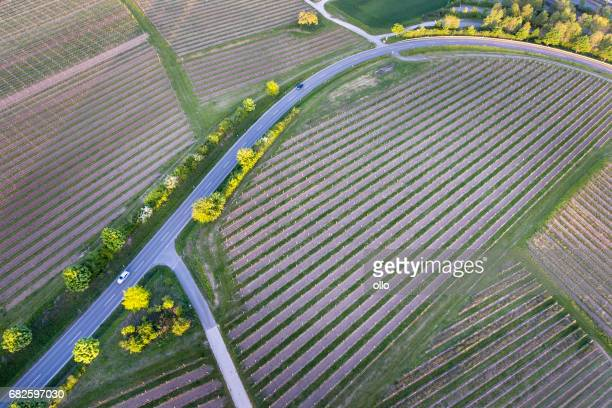 Vineyards and road at dusk - aerial view