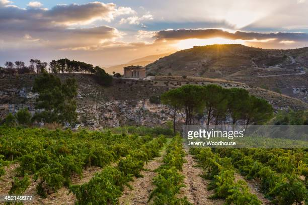 Vineyards and Temple of Hera at sunrise, Selinunte, Sicily, Italy