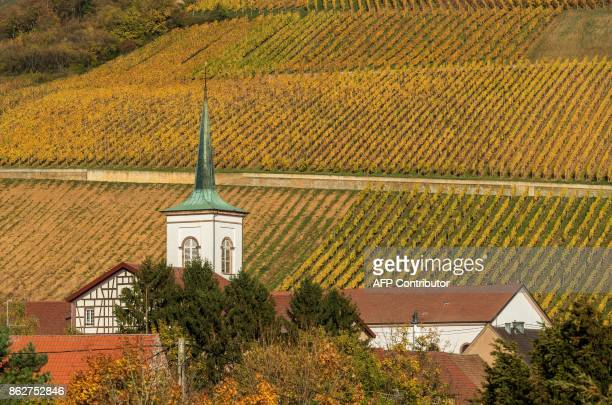 Vineyards and the village's church are pictured under the Autumn sun in the Alsatian village of Barr northeastern France on October 18 2017 / AFP...