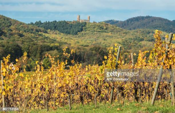 Vineyards are pictured under the Autumn sun in the Alsatian village of Mittelbergheim northeastern France on October 18 2017 / AFP PHOTO / PATRICK...