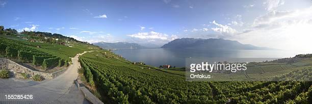 Weinberge um den Genfer See bietet Montreux, Schweiz