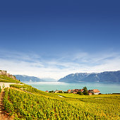Vineyards at Geneva lake in Lavaux area, Switzerland