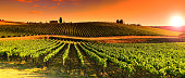 Vineyards at Sunset near village of Le Sieci in Tuscany Region. Chianti, Italy.