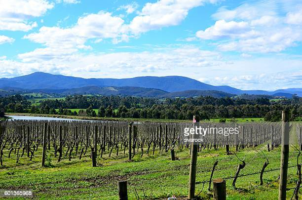 Vineyards at Yarra Valley