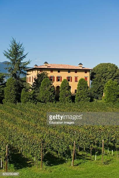 Vineyards Borgonato Franciacorta Lombardy Italy