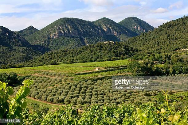 Vineyards Col d'ey BuislesBaronnies Rh™neAlpes France