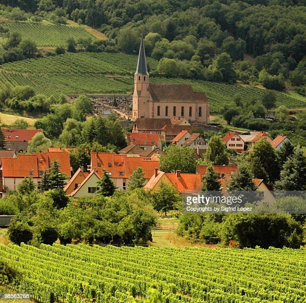 Vineyards, Hunawihr, Alsace, France, Europe