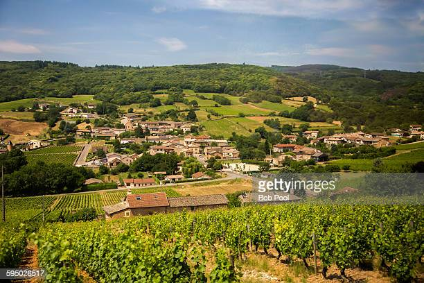 Vineyards in Burgundy region, France