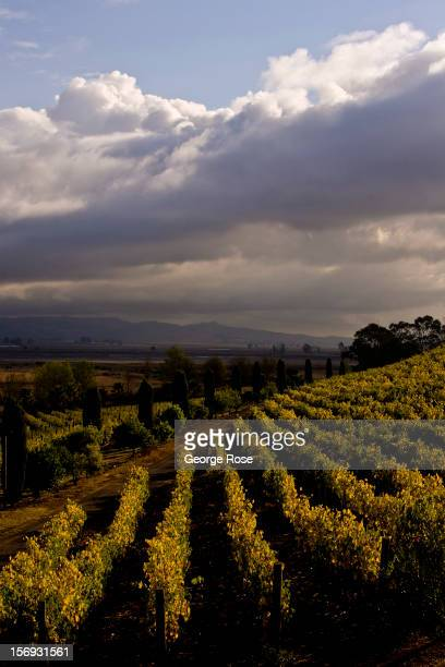 Vineyards in Carneros is seen on October 24 in Sonoma California Some 136 million international travelers visit the State each year generating nearly...