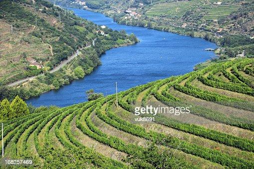 Vineyards in Douro Valley
