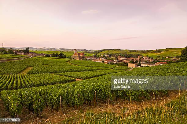 vineyards in fuisse