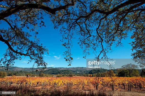 Vineyards in Napa Valley